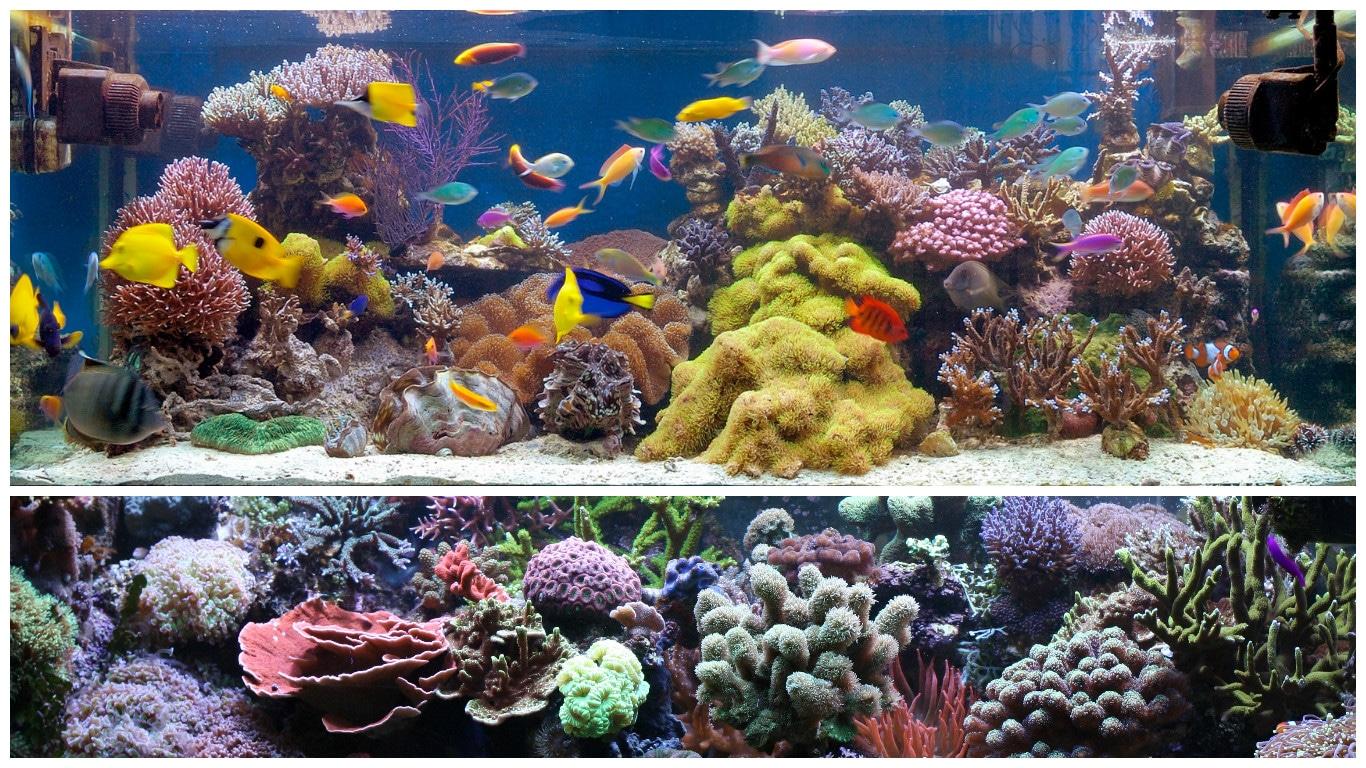 Acuario marino todoacuarios for Peces de acuario marino