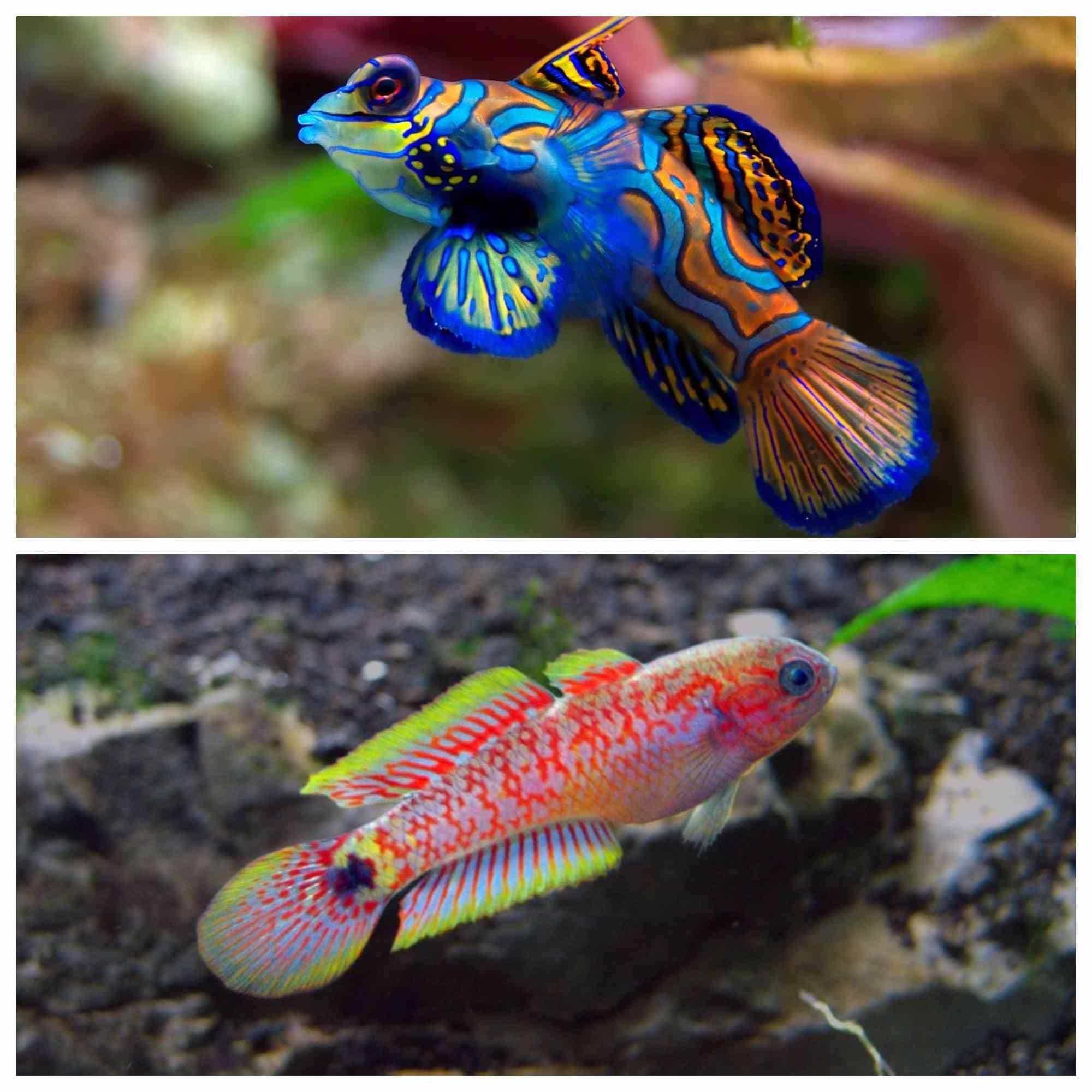 Informaci n til y venta de acuarios marinos y complementos for Peces marinos para acuarios pequenos