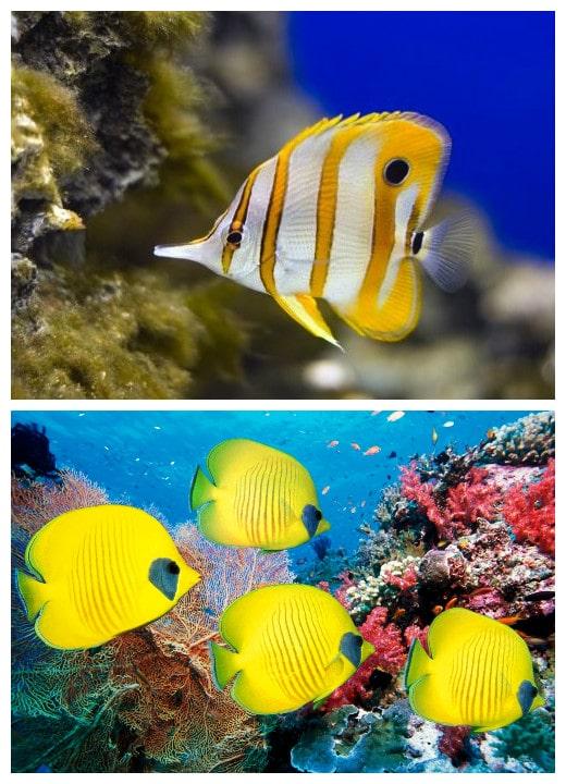 Peces de acuario todoacuarios for Comida para peces tropicales acuario