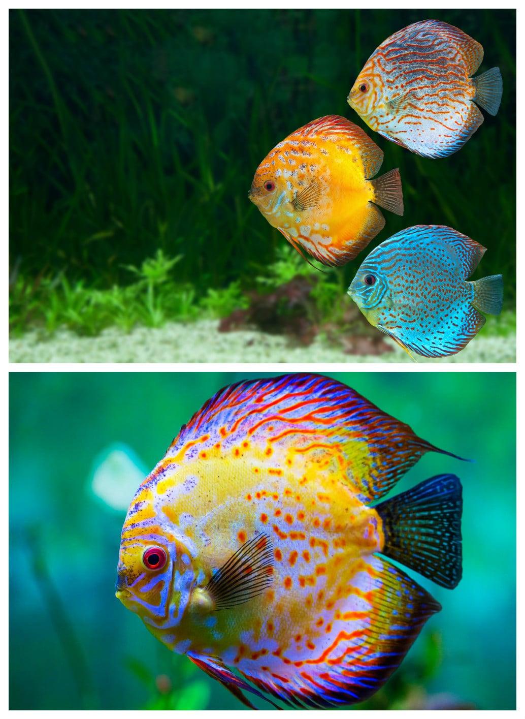 Peces de acuario todoacuarios for Comida congelada para peces