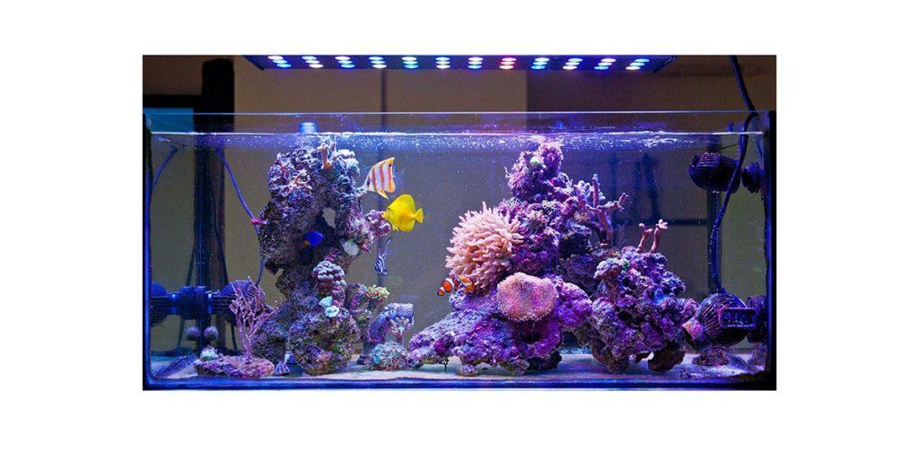 luces de acuario