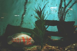 plantas de acuario