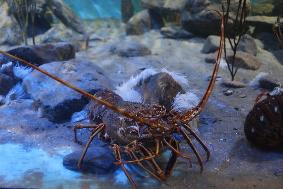 pecera crustaceos