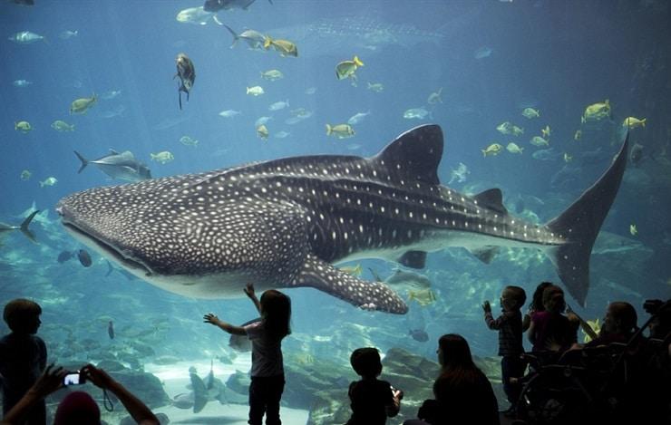 acuario de genova