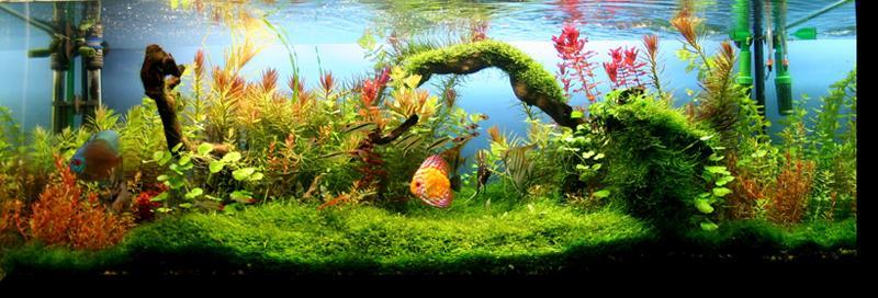 como hacer un acuario plantado
