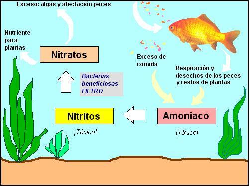 ciclado de acuario