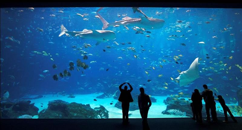 acuario georgia