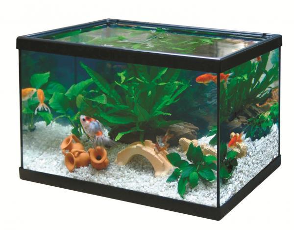acuario agua fria